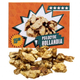 Hollandia Magic Truffles Kopen