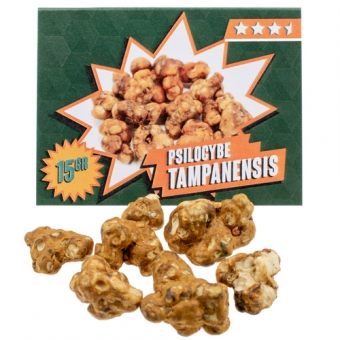 Tampanensis Magic Truffles kopen
